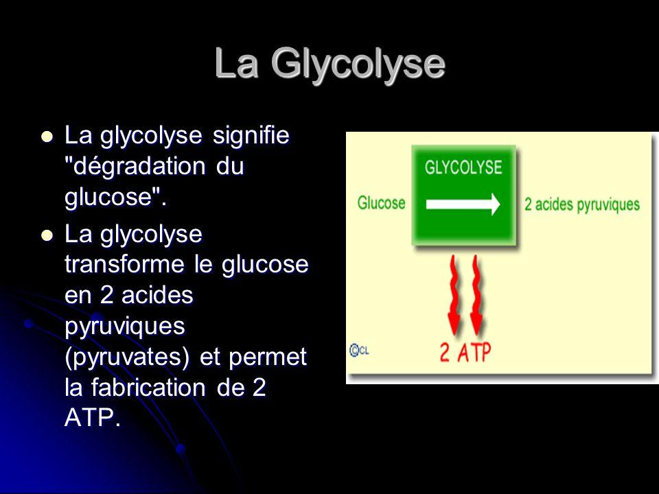 La Glycolyse La glycolyse signifie dégradation du glucose .