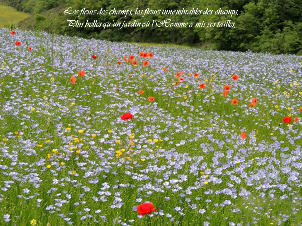La belle au bois dormait ppt t l charger - Ou acheter le tapis champ de fleurs ...