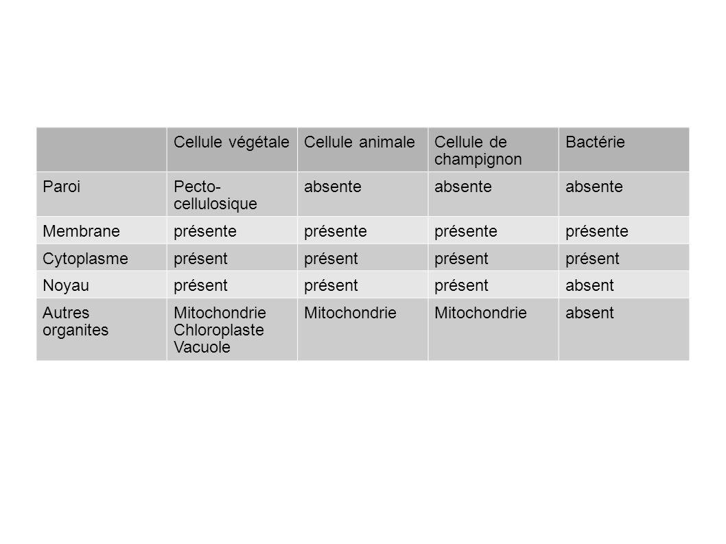 Cellule végétale Cellule animale. Cellule de champignon. Bactérie. Paroi. Pecto-cellulosique. absente.