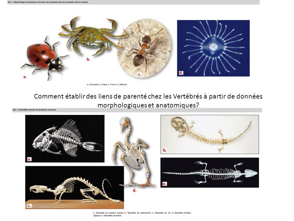 Comment établir des liens de parenté chez les Vertébrés à partir de données morphologiques et anatomiques