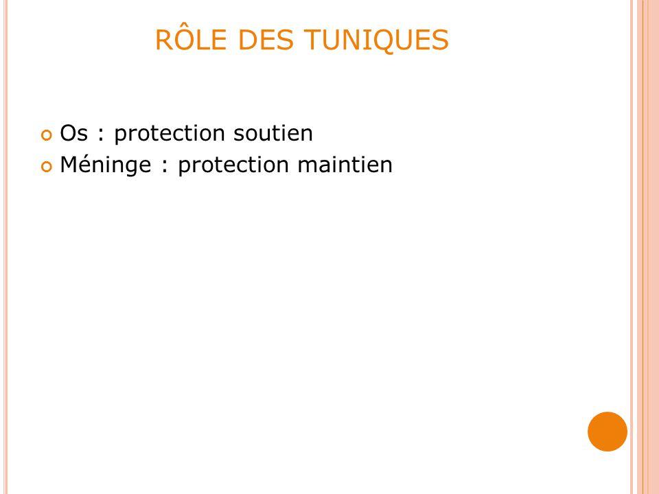 RÔLE DES TUNIQUES Os : protection soutien