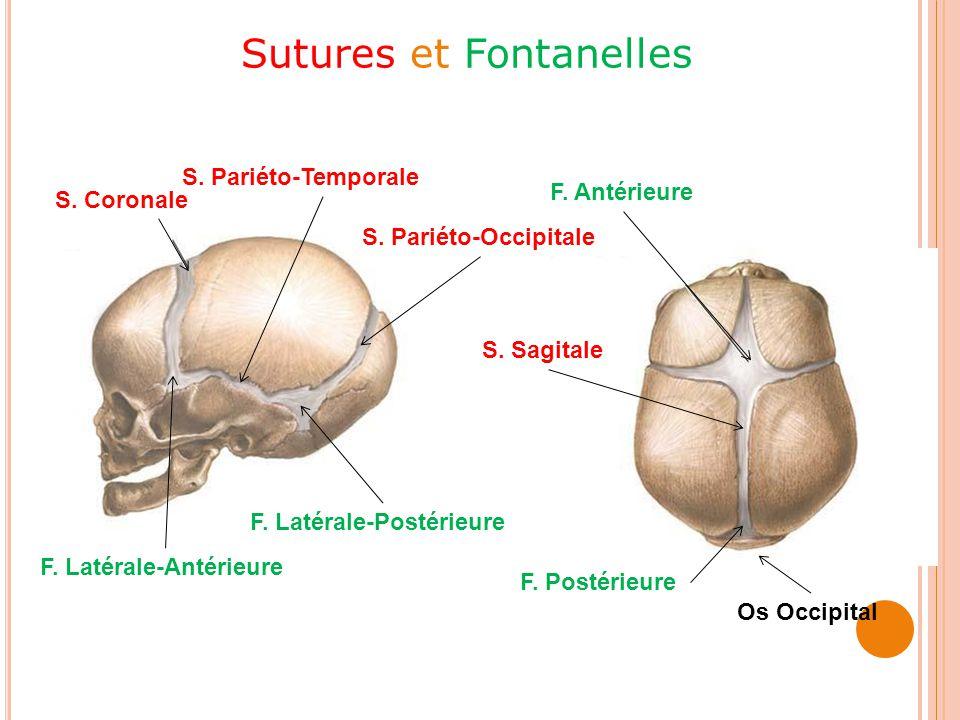 Sutures et Fontanelles