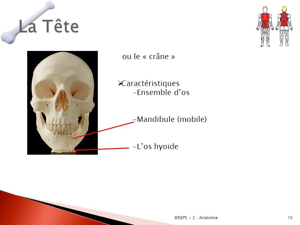 La Tête ou le « crâne » Caractéristiques Ensemble d'os