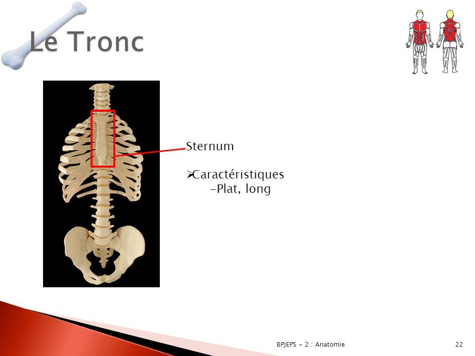 Le Tronc Sternum Caractéristiques Plat, long BPJEPS - 2 : Anatomie