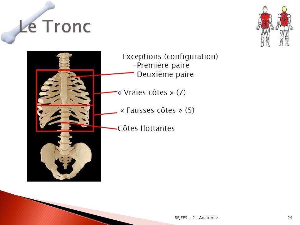 Le Tronc Exceptions (configuration) Première paire Deuxième paire
