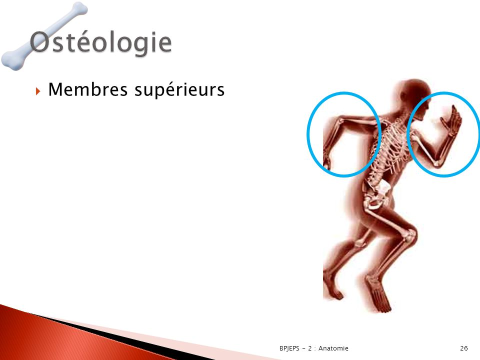 Ostéologie Membres supérieurs BPJEPS - 2 : Anatomie