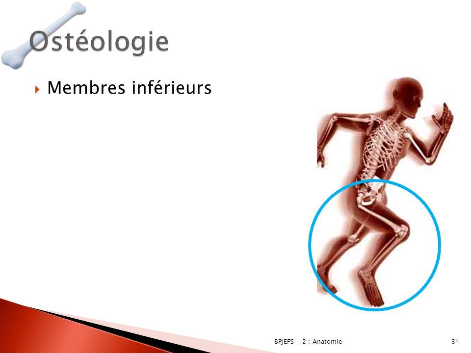 Ostéologie Membres inférieurs BPJEPS - 2 : Anatomie
