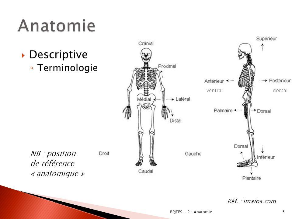 Anatomie Descriptive Terminologie NB : position de référence