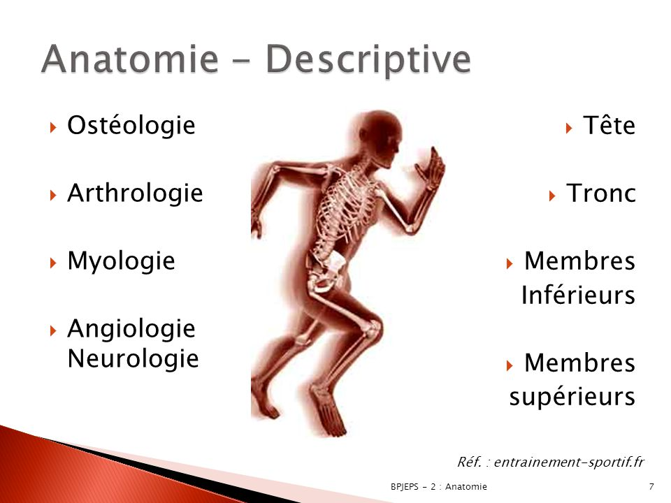 Anatomie - Descriptive