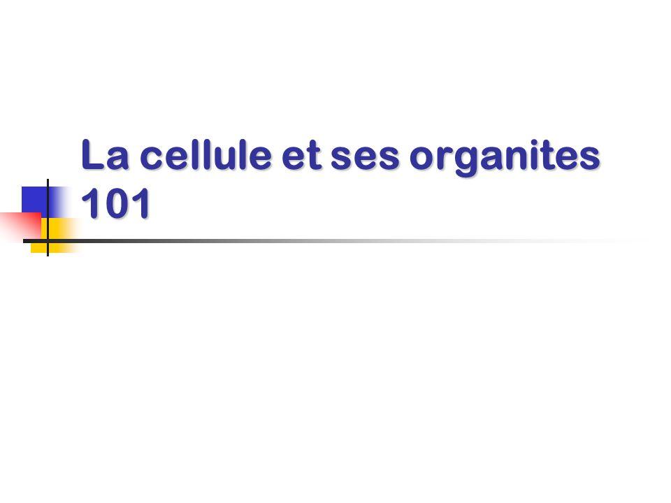 La cellule et ses organites 101