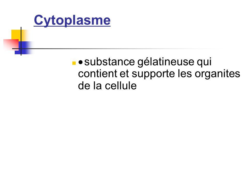 Cytoplasme  substance gélatineuse qui contient et supporte les organites de la cellule