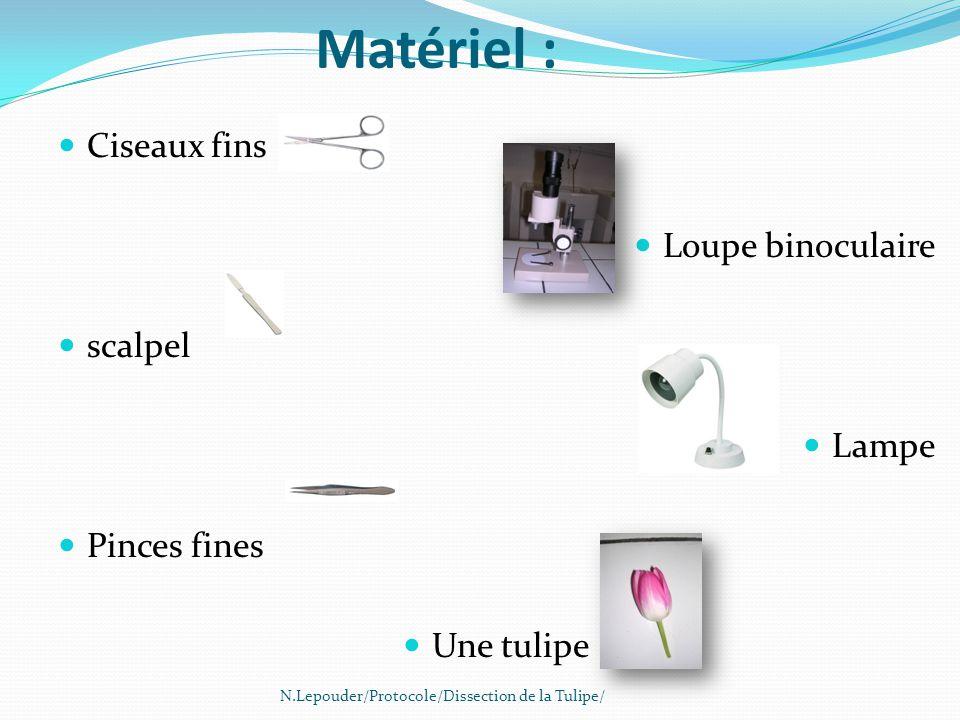 Matériel : Ciseaux fins Loupe binoculaire scalpel Lampe Pinces fines