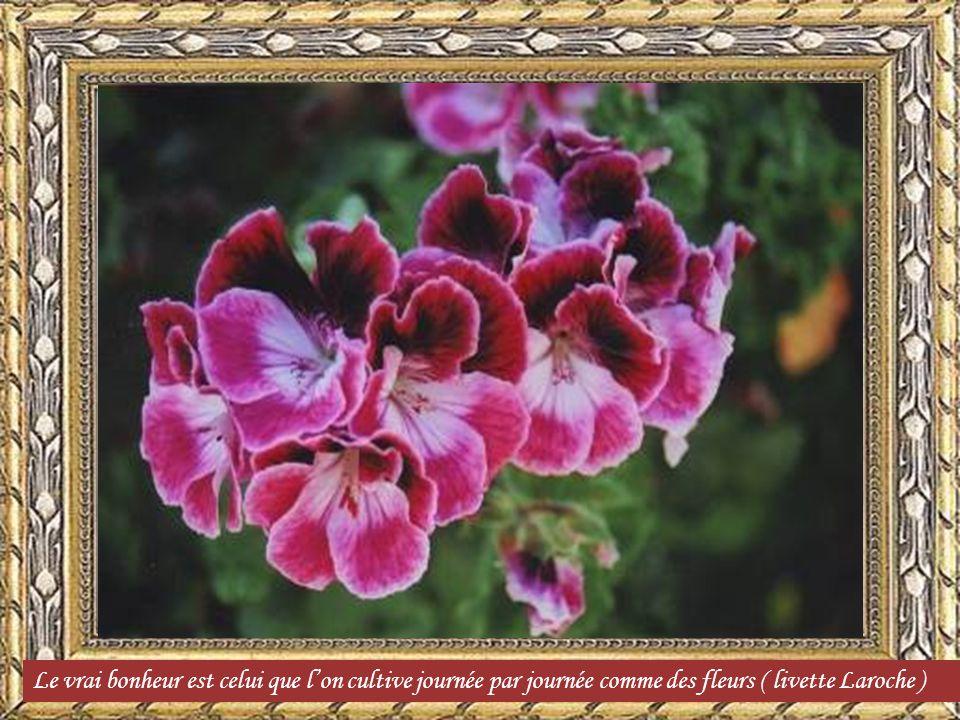Un grain de poussi re ne souille pas une fleur george for Commandes fleurs