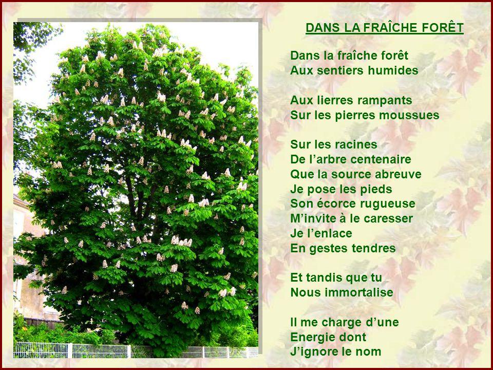 Connu UN CENT D'ANCRES Poèmes de Bernard BROCKMAN Diaporama de Jacky  YJ66