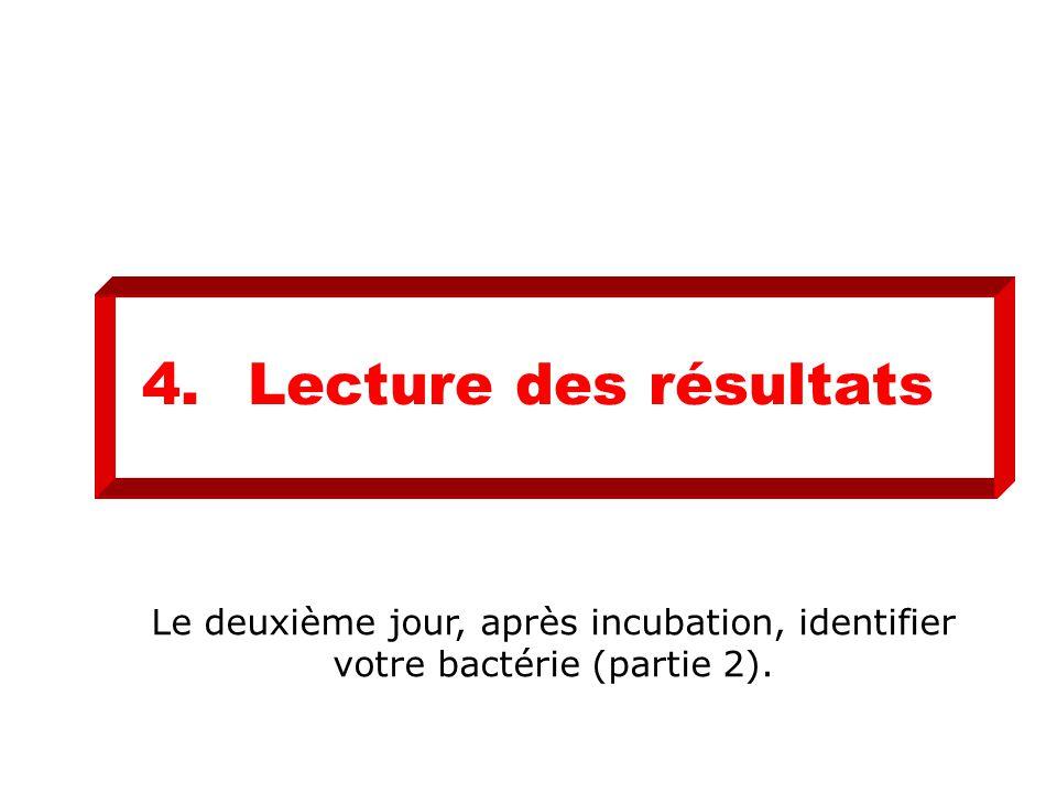 4. Lecture des résultats Le deuxième jour, après incubation, identifier votre bactérie (partie 2).