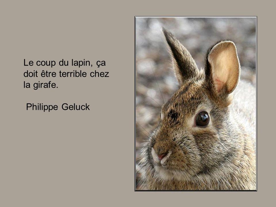 Vous permettez que je vous pose un gentil lapin le - Coup du lapin indemnisation assurance ...