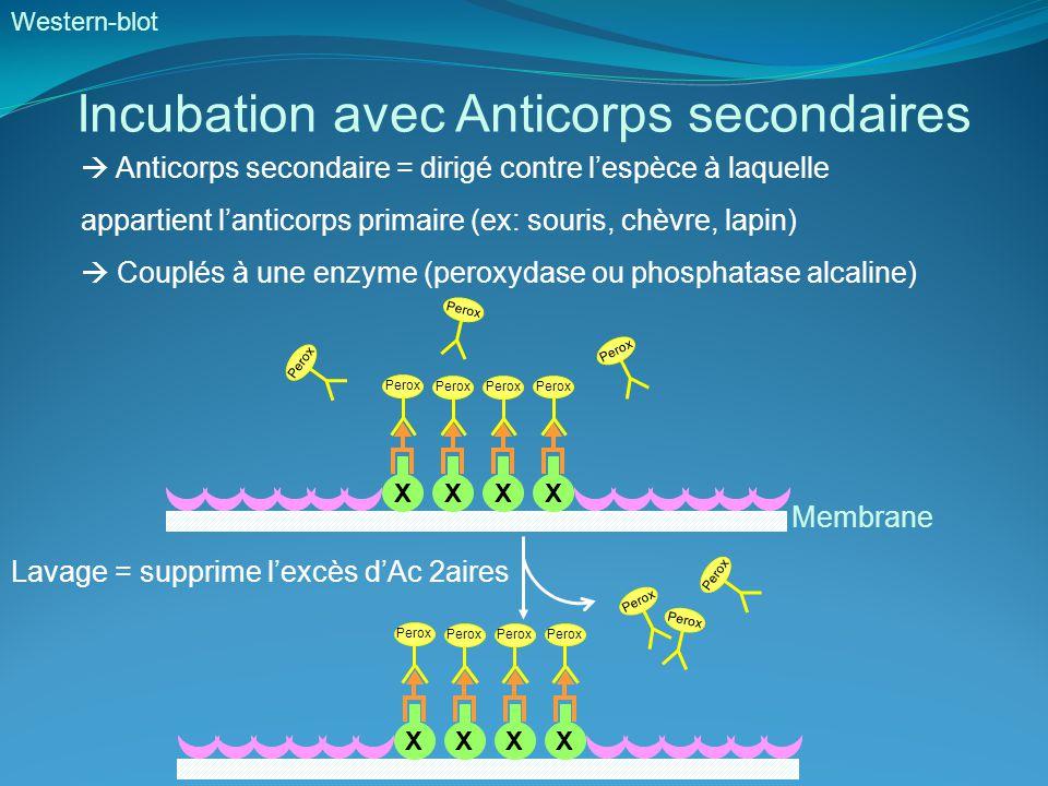 introduction aux techniques de biologie mol u00e9culaire