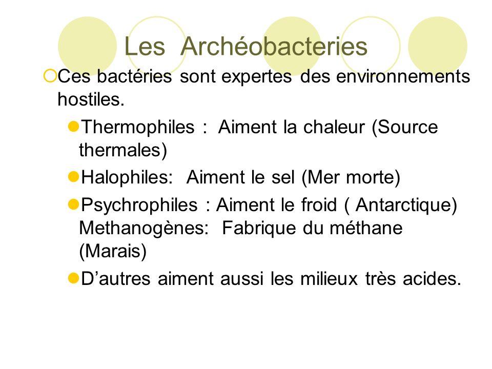 Les Archéobacteries Ces bactéries sont expertes des environnements hostiles. Thermophiles : Aiment la chaleur (Source thermales)