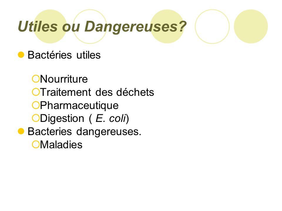 Utiles ou Dangereuses Bactéries utiles Nourriture