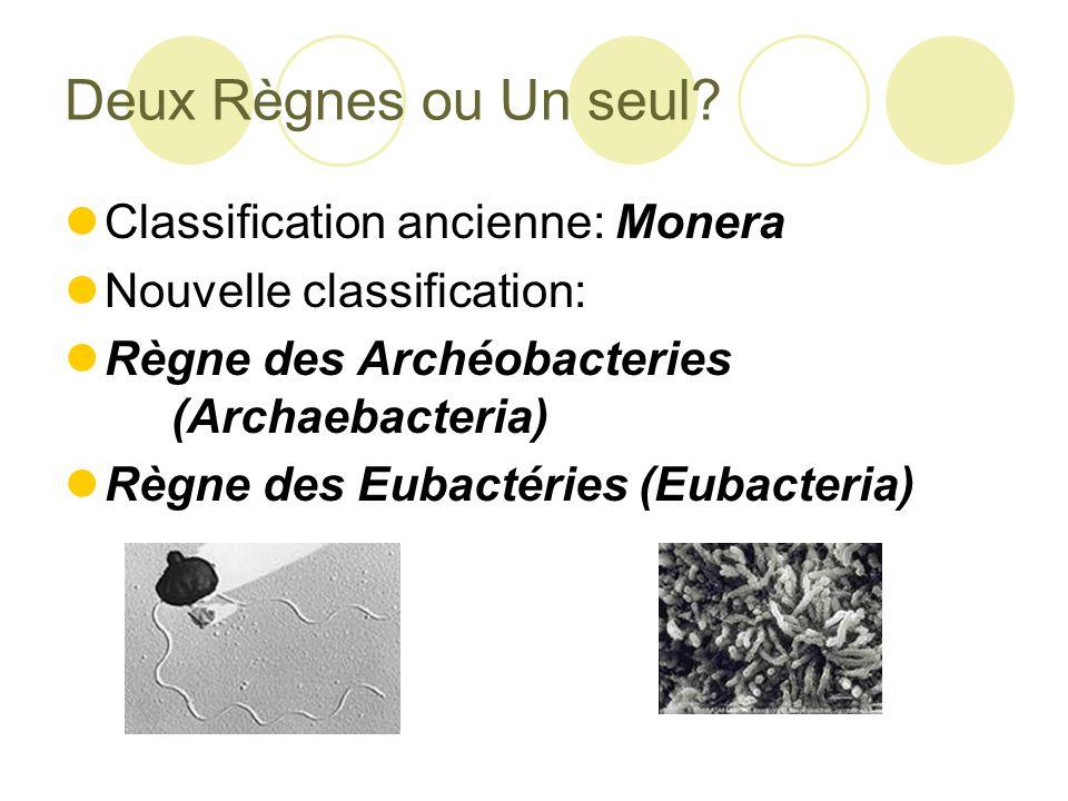 Deux Règnes ou Un seul Classification ancienne: Monera
