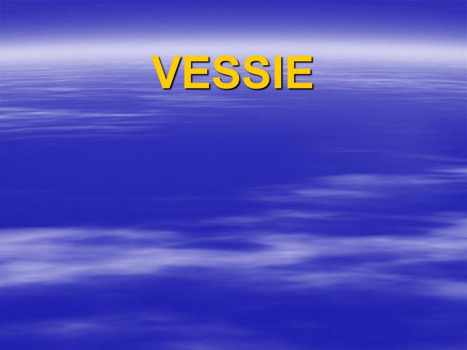 VESSIE