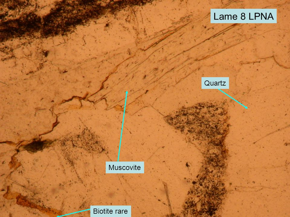 Lame 8 LPNA Quartz Muscovite Biotite rare