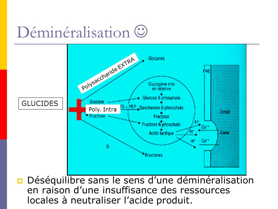 Déminéralisation  Polysaccharide EXTRA. GLUCIDES. Poly. Intra.