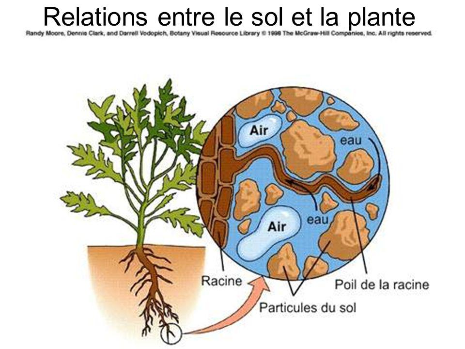Relations entre le sol et la plante