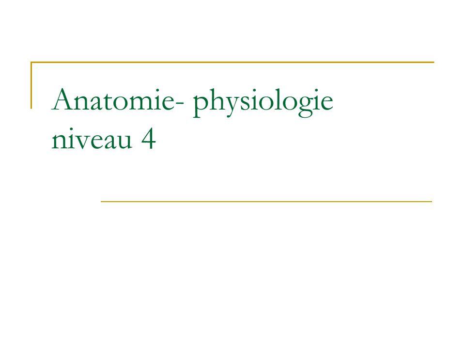 Wunderbar Anatomie Und Physiologie Kennzeichnung Ideen - Anatomie ...
