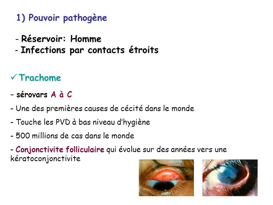 Chlamydia ppt t l charger for Conjonctivite et piscine
