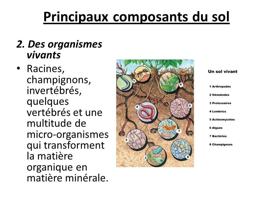 Principaux composants du sol