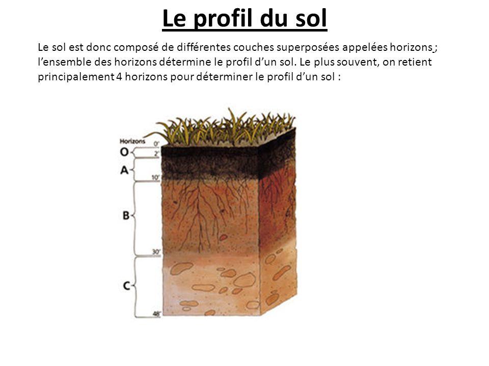 Le profil du sol