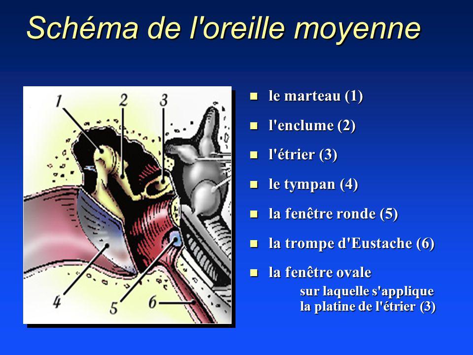 Anesthesie en chirurgie cervico faciale ppt video online for Fenetre ronde oreille