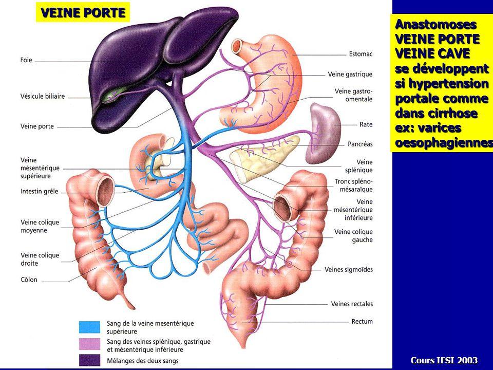 Veine porte anatomie