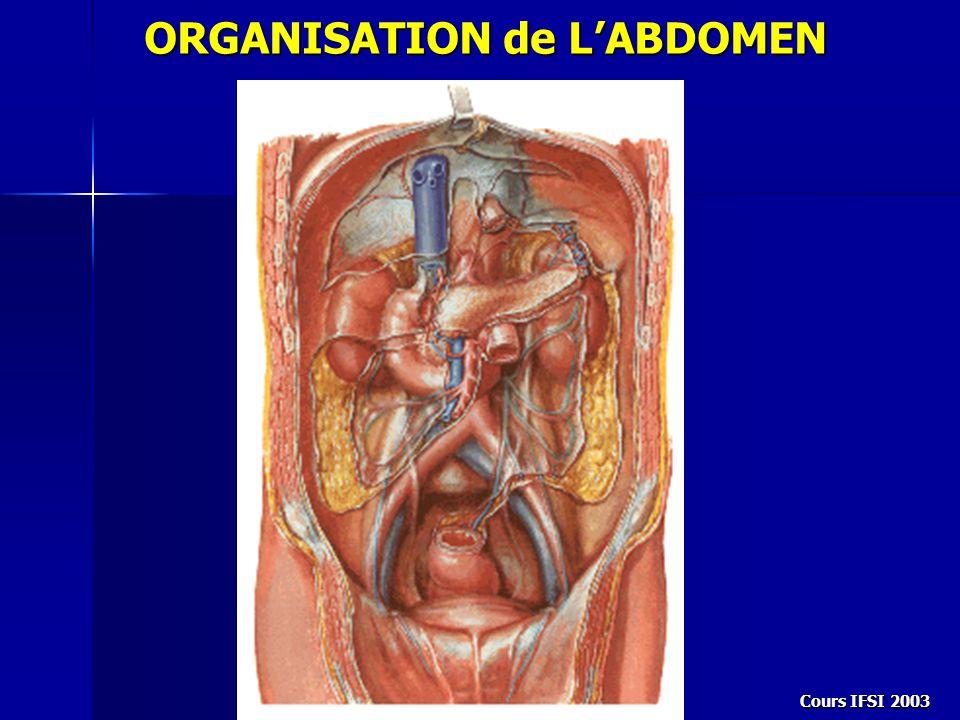 ORGANISATION de L'ABDOMEN