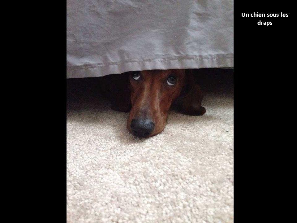Ces 40 chiens qui jouent cache cache n ont vraiment rien - A combien laver les draps ...