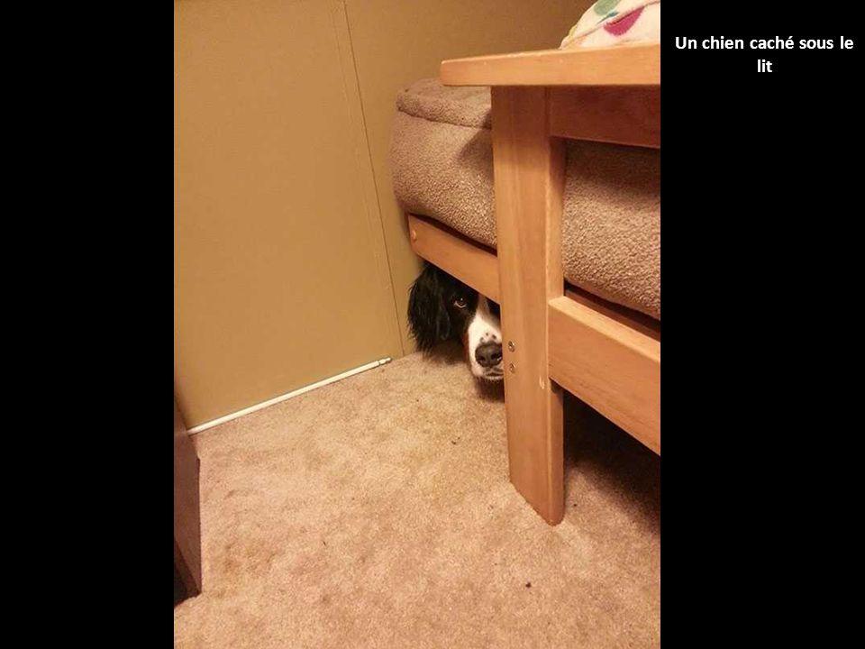 Ces 40 chiens qui jouent à cache-cache n'ont vraiment rien