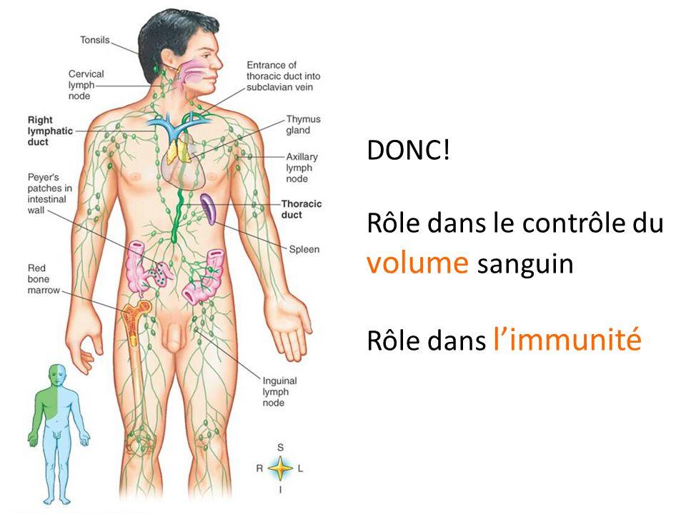 DONC! Rôle dans le contrôle du volume sanguin Rôle dans l'immunité