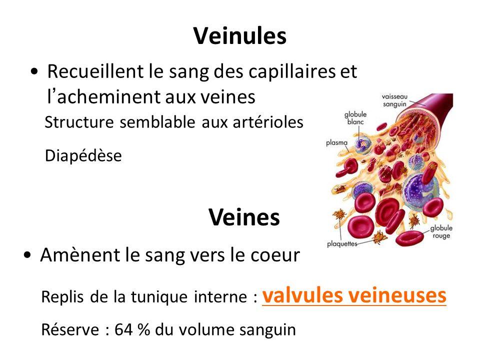 Veinules Recueillent le sang des capillaires et l'acheminent aux veines. Structure semblable aux artérioles.