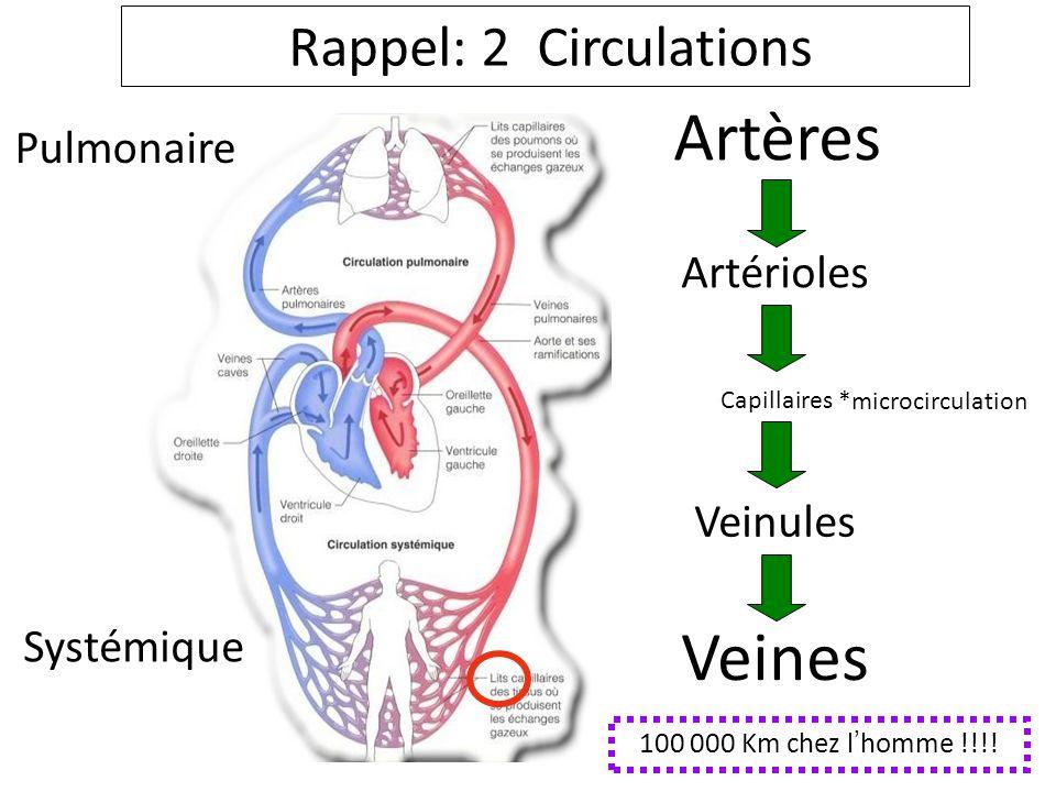 Artères Veines Rappel: 2 Circulations Pulmonaire Artérioles Veinules