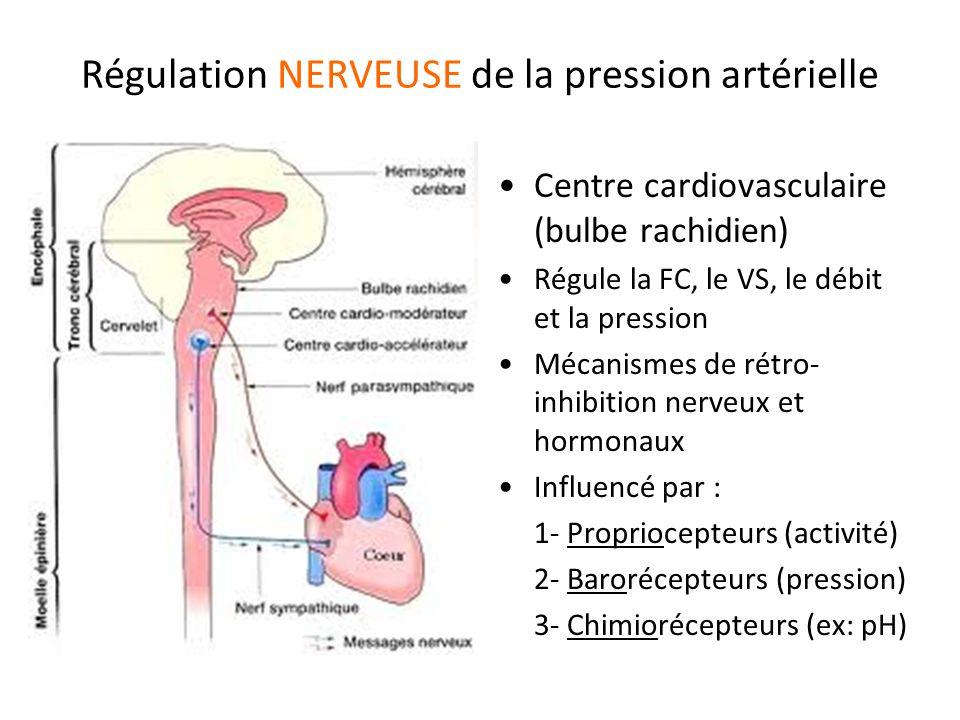 Régulation NERVEUSE de la pression artérielle