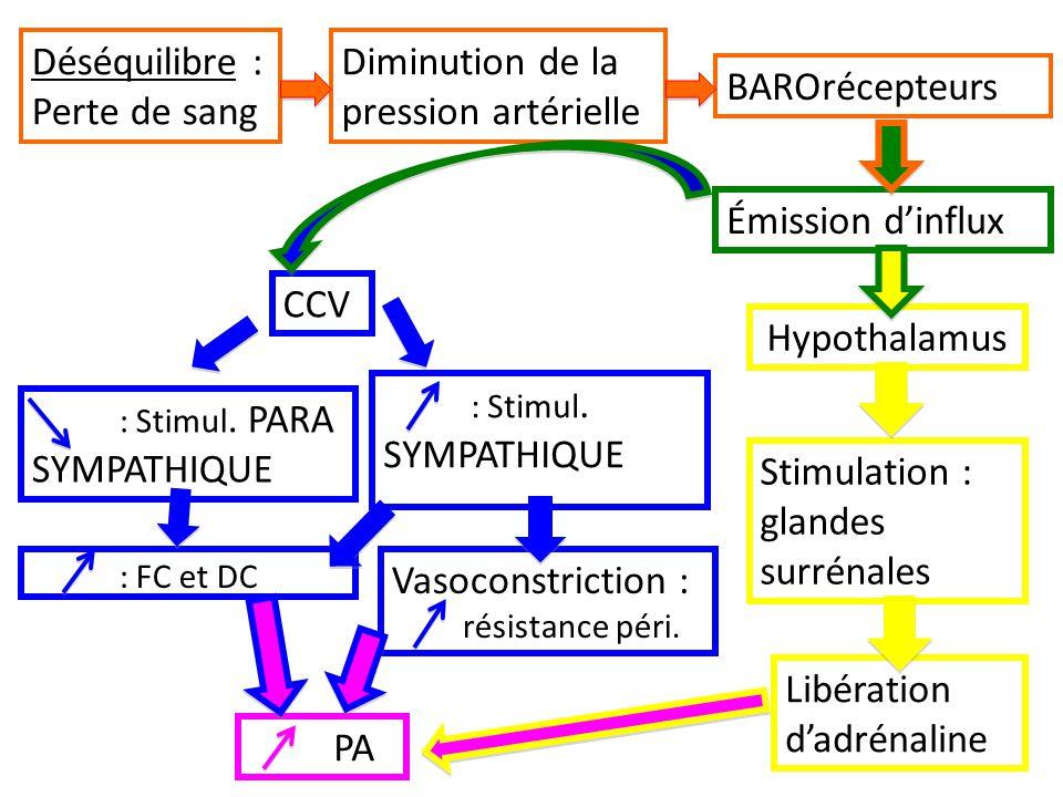 Déséquilibre : Perte de sang Diminution de la pression artérielle