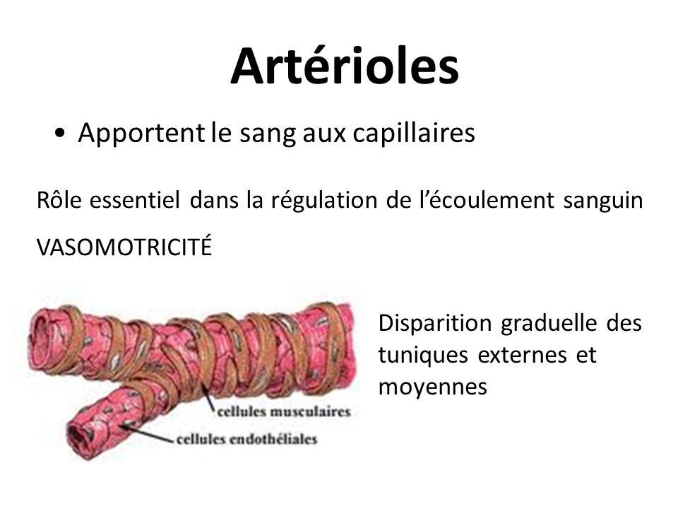 Artérioles Apportent le sang aux capillaires