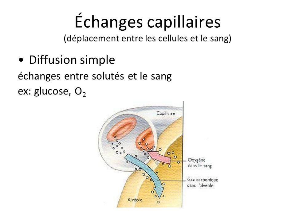 Échanges capillaires (déplacement entre les cellules et le sang)