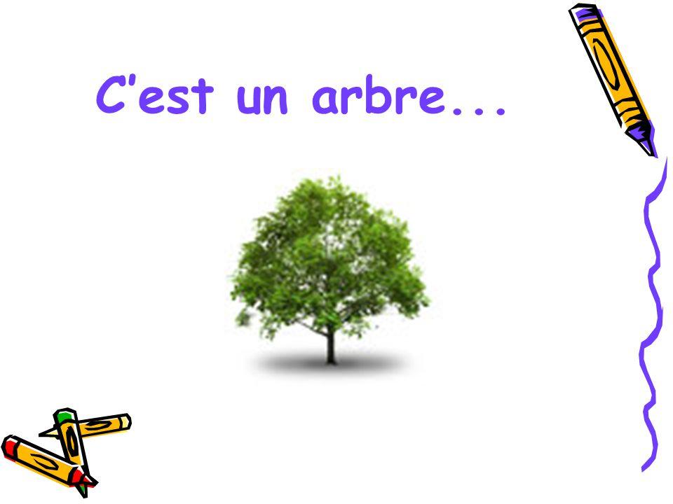 C'est un arbre...