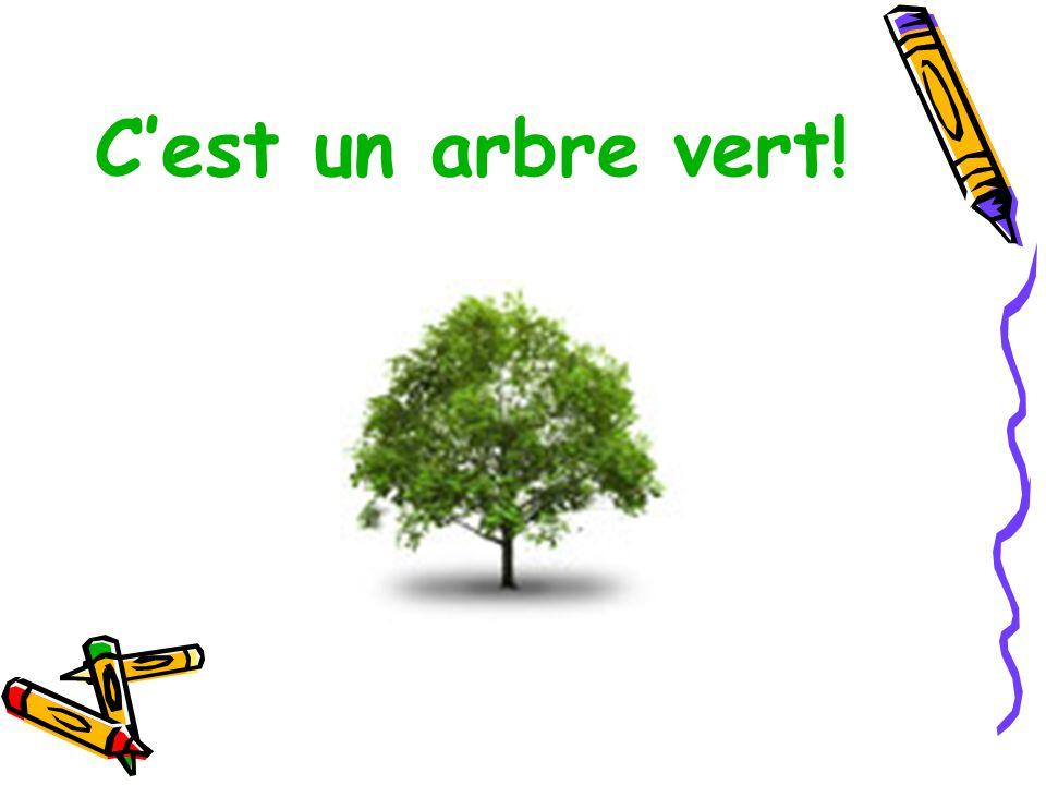 C'est un arbre vert!