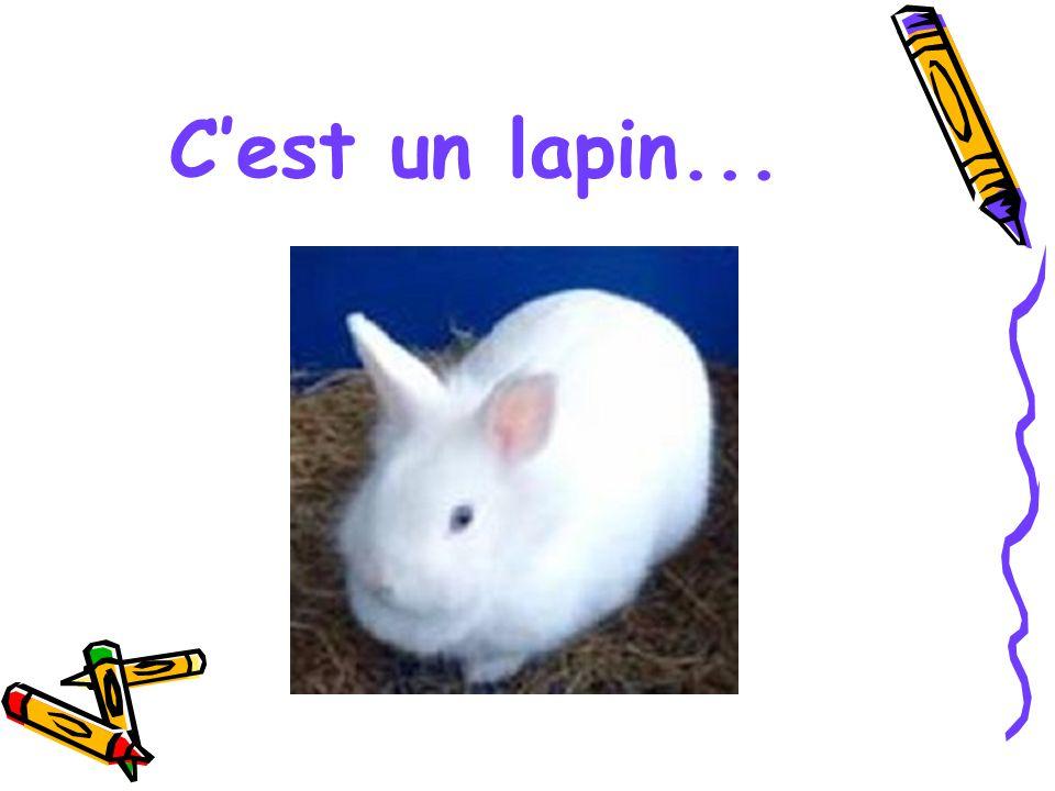 C'est un lapin...