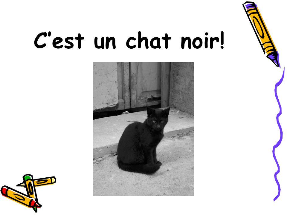 C'est un chat noir!