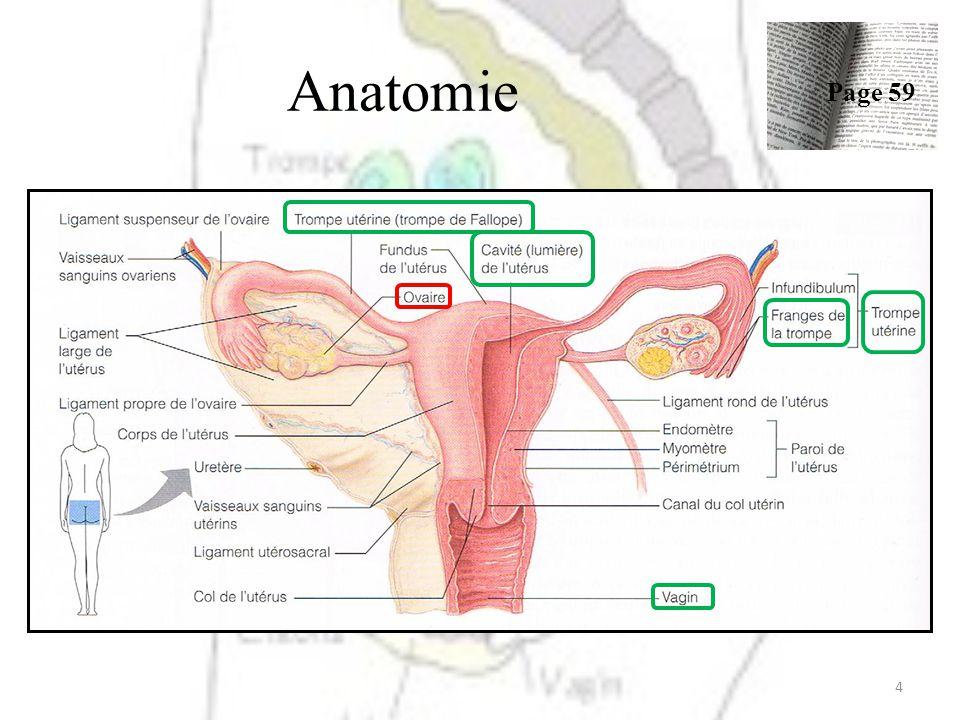 Niedlich Lumbalpunktion Verfahren Anatomie Fotos - Anatomie Von ...