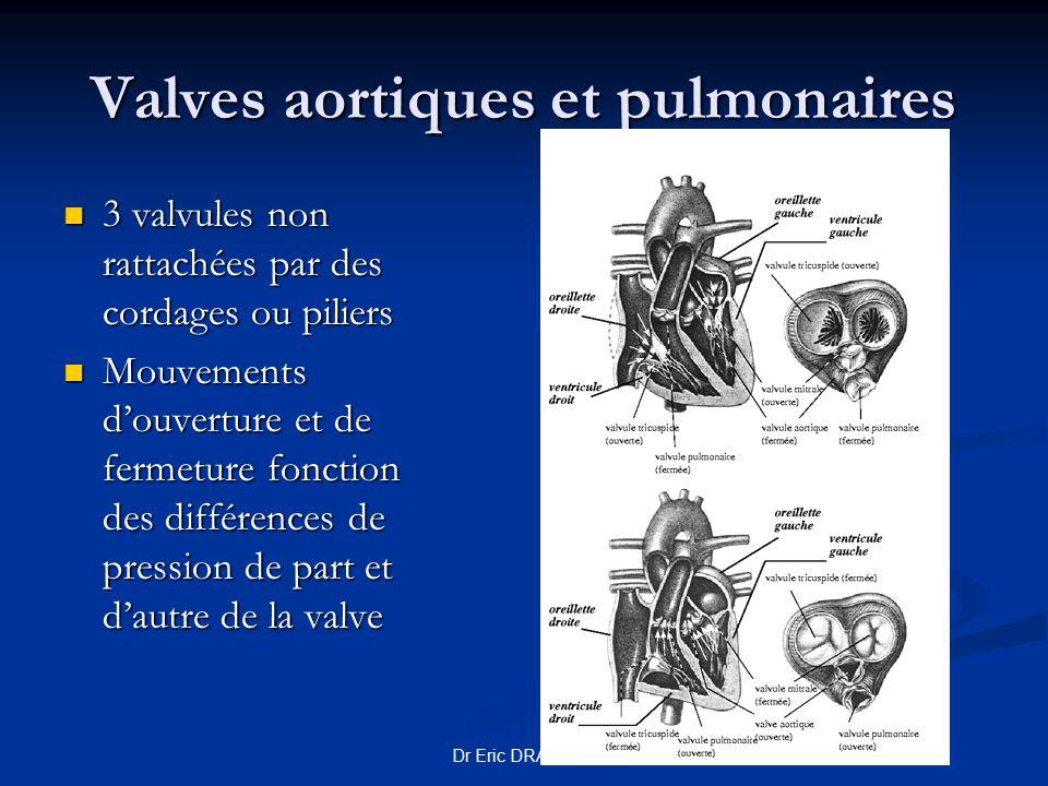 Valves aortiques et pulmonaires